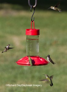 Dr. JB's Hummingbird Feeder--a bottle style feeder that disassembles easily to clean in dishwasher